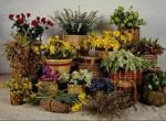 Ботанический сад в квартире