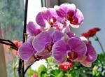 О домашнем цветоводстве