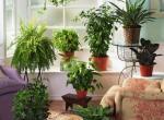 Польза от растений