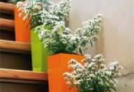 Комнатные растения в дизайне интерьера