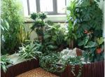 Цветы в доме - модно и экологично