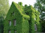 Декорирование неприглядных фасадов и построек