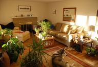 Декорирование помещения комнатными цветами